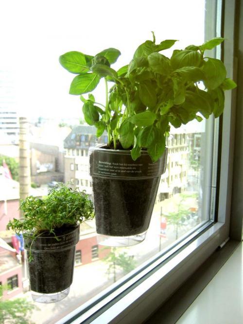 Windowherbs
