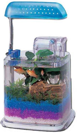 Razzle Dazzle Fish Aquarium
