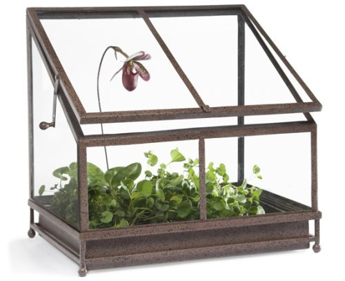 Tabletop Terrarium