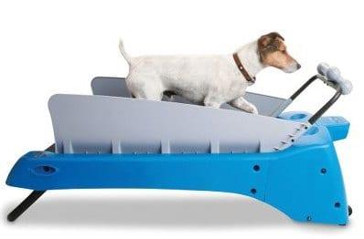 The Canine Treadmill