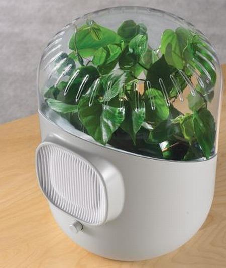 Botanical Air Purifier