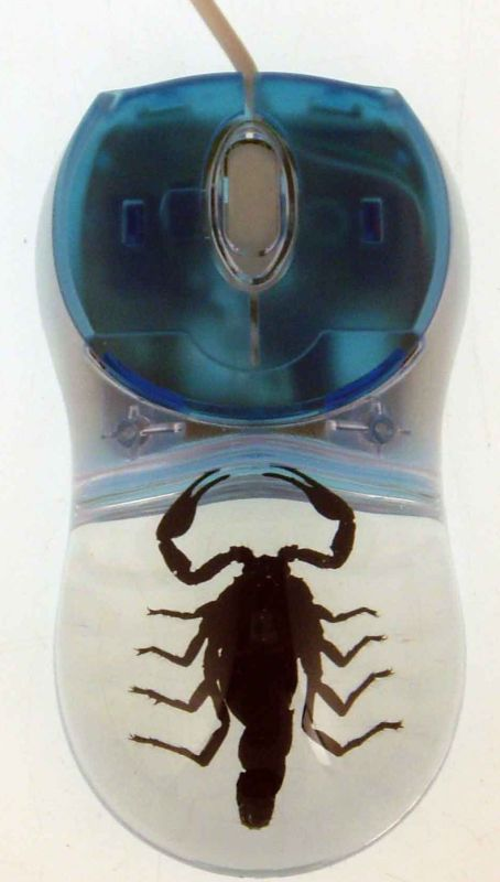 Computer Mouse With Real Scorpion