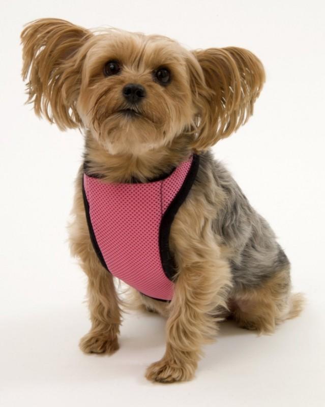 Warming/Cooling Dog Harness, Adjustable Neck