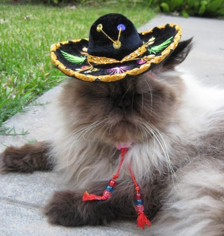 Miniature Sombrero for Cats and Dogs