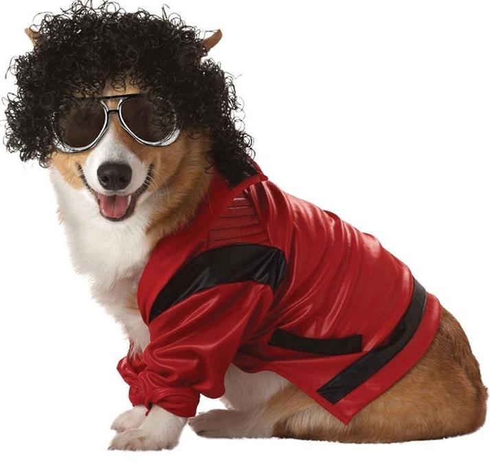 Dog Costume Halloween Costume