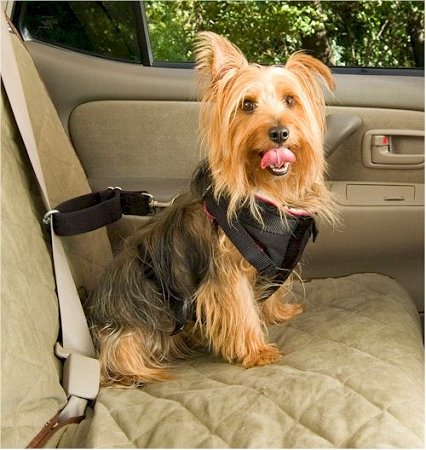 Solvit Pet Car Safety Harnesses For Dogs