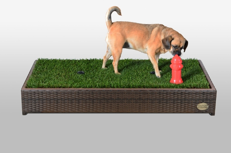 First Automated Grass Litter Box for Dogs