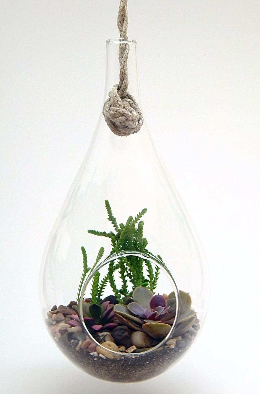 Succulent Teardrop Terrarium Kit