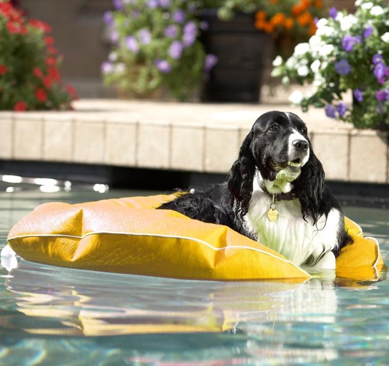 Poochie Pool & Deck Lounger