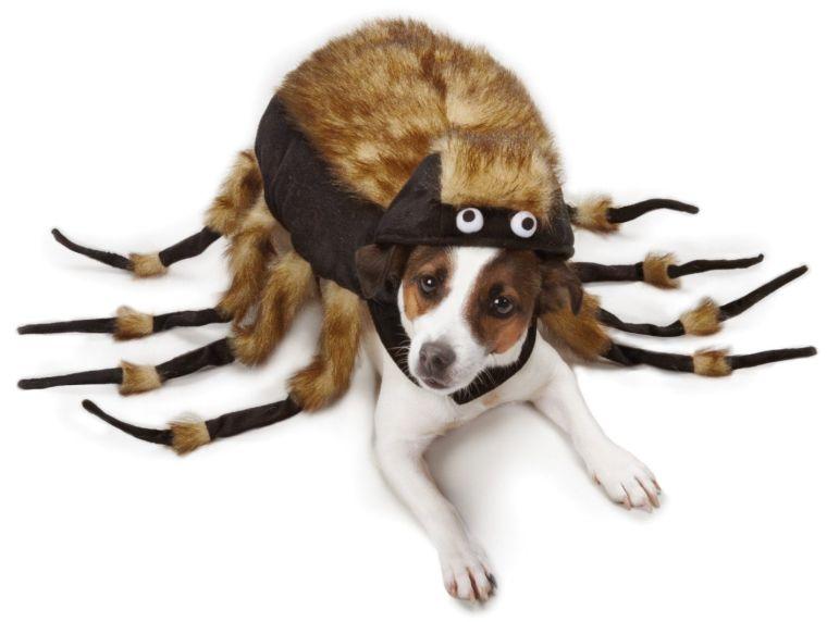 fuzzy-tarantula-costume