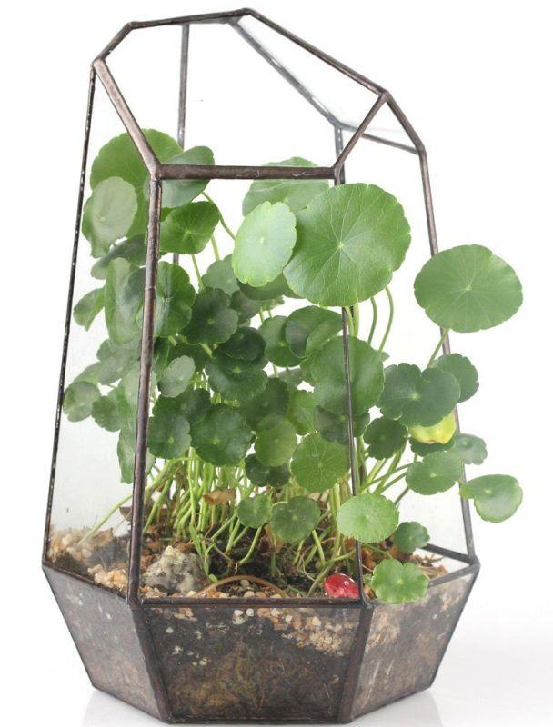 geometric-terrarium-box-tabletop-succulent-plant-planter-flower-pot-fern-moss