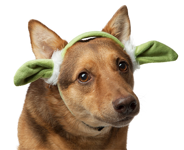 imgt_sw_yoda_ears_for_dogs