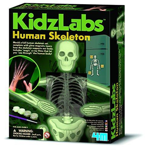 4m-kidz-labs-human-skeleton-play-set