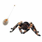 Run away! Tarantula comes