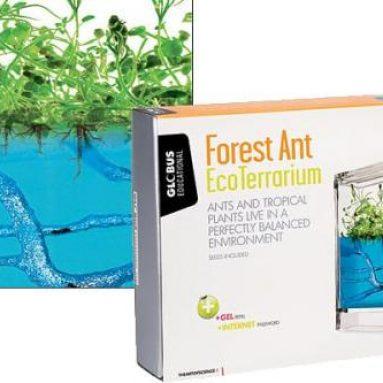 Forest Ant EcoTerrarium