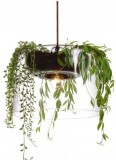 Pendant with plant