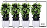 4 Tower Garden System