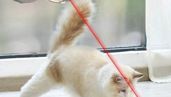 Laser Cat Toys