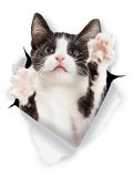 Winston & Bear 3D Cat Stickers