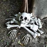 Gonioa Bag of Skeleton Bones and Skull