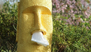 Moai Tissue Box
