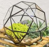 Geometric Dome Terrarium Triangular Pentagon Mix