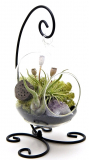 Bliss Gardens Air Plant Terrarium Kit with Amethyst
