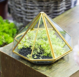 Tabletop Desk Succulent Fern Moss Plant Display Terrarium