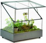 Terrarium Wardian Case Plant Container