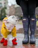 The Dog's Wellington Boots