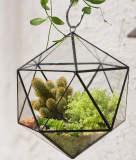 Hanging Geometric Terrarium Balcony