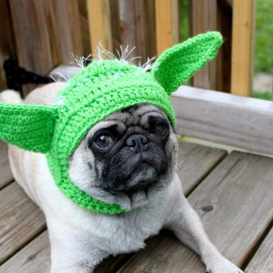 Dog Hat – Yoda